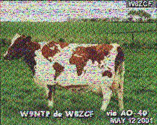 cow piccture via ao-40